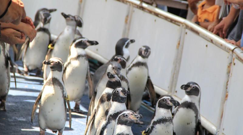 สวนสัตว์เปิดเขาเขียว : ที่เที่ยวชลบุรี