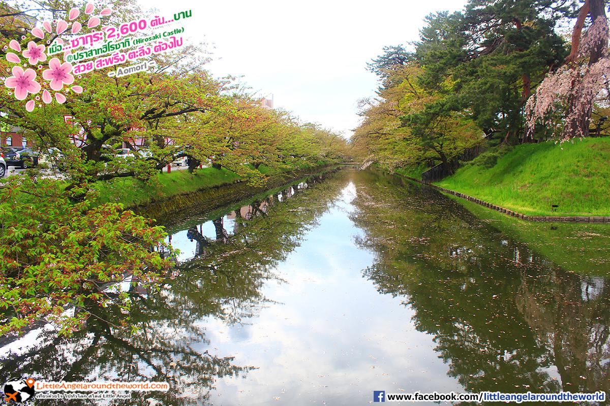 ในช่วงที่ซากุระบาน บริเวณนี้จะมีกลีบซากุระหล่นจากต้นและลอยเต็มคลองสวยงามมาก : เที่ยวอาโอโมริ ซากุระกว่า 2,600 ต้น ที่ปราสาทฮิโรซากิ (Hirosaki Castle)