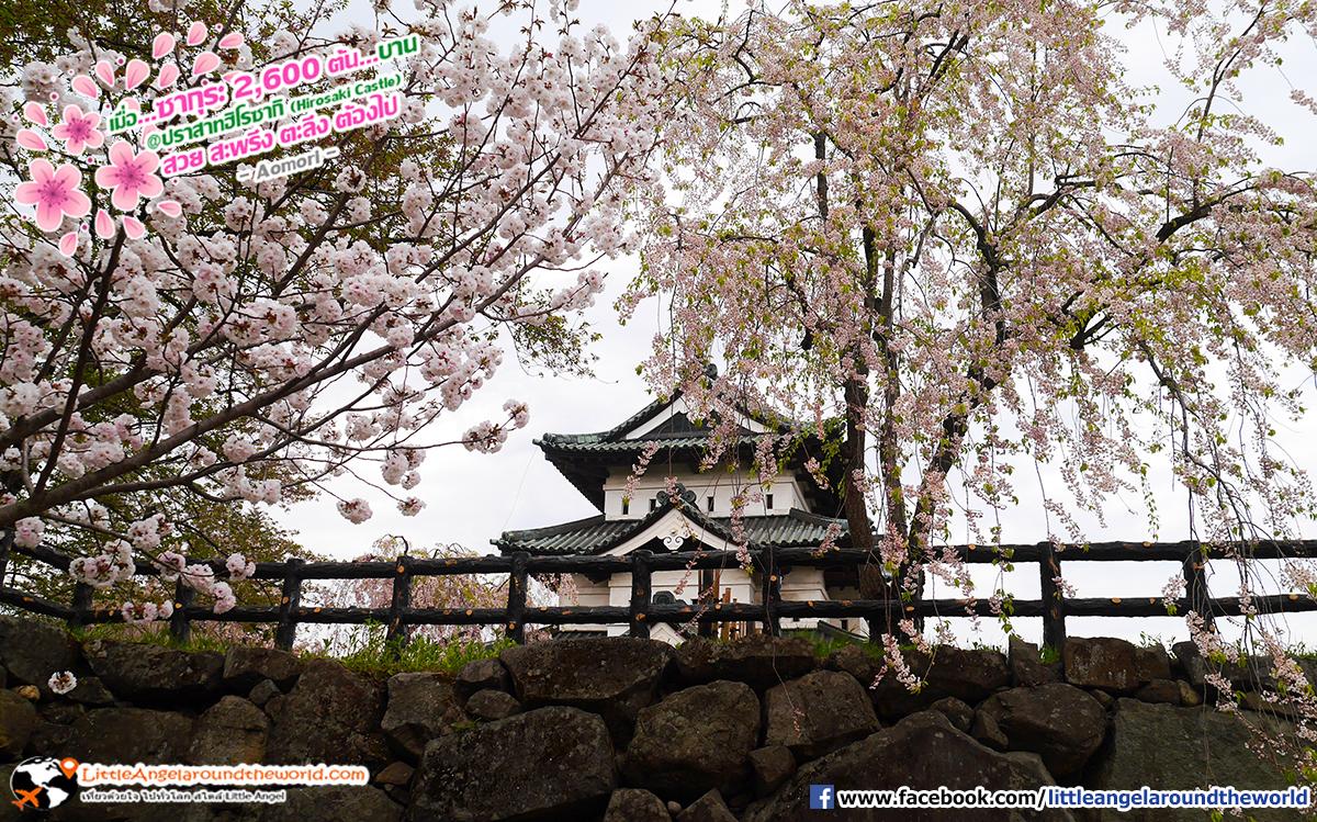 จุดถ่ายภาพสวยห้ามพลาด : เที่ยวอาโอโมริ ซากุระกว่า 2,600 ต้น ที่ปราสาทฮิโรซากิ (Hirosaki Castle)