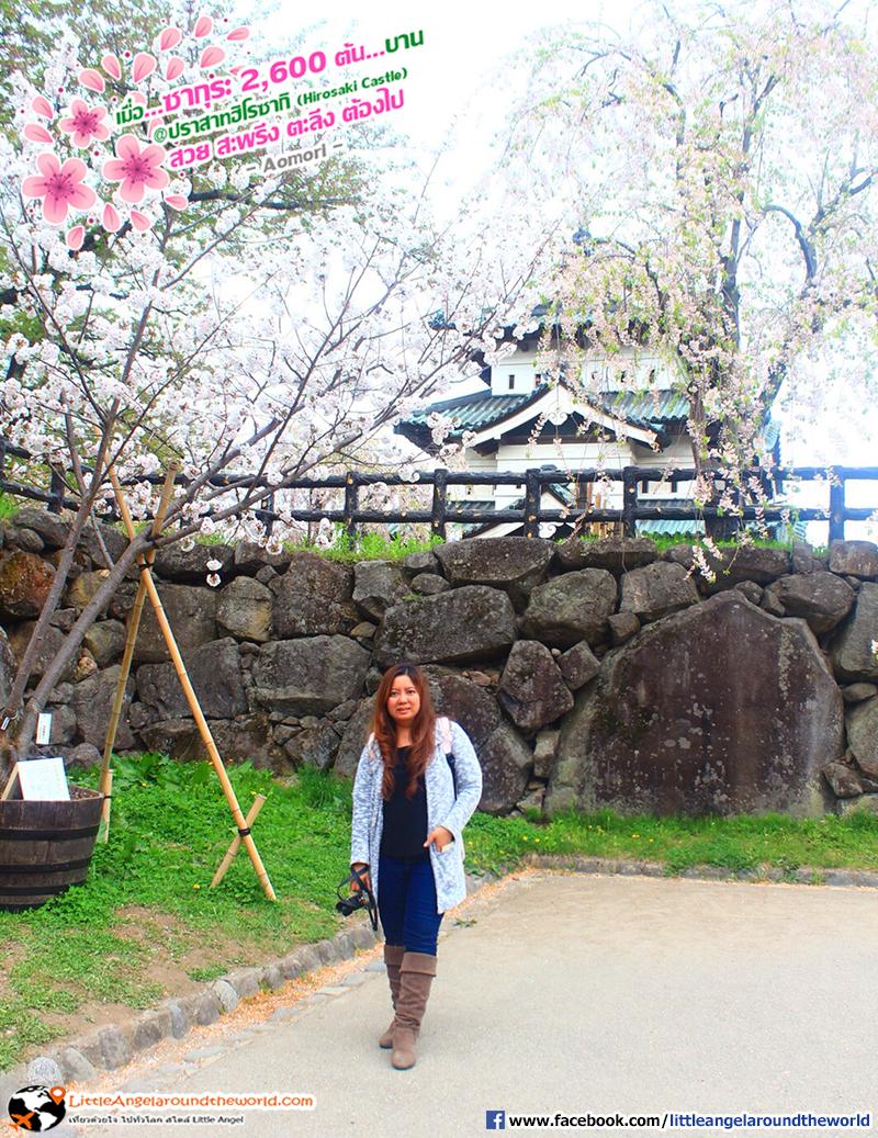 ไม่พลาดเก็บบรรยากาศ จุดถ่ายภาพปราสาทและซากุระ : เที่ยวอาโอโมริ ซากุระกว่า 2,600 ต้น ที่ปราสาทฮิโรซากิ (Hirosaki Castle)