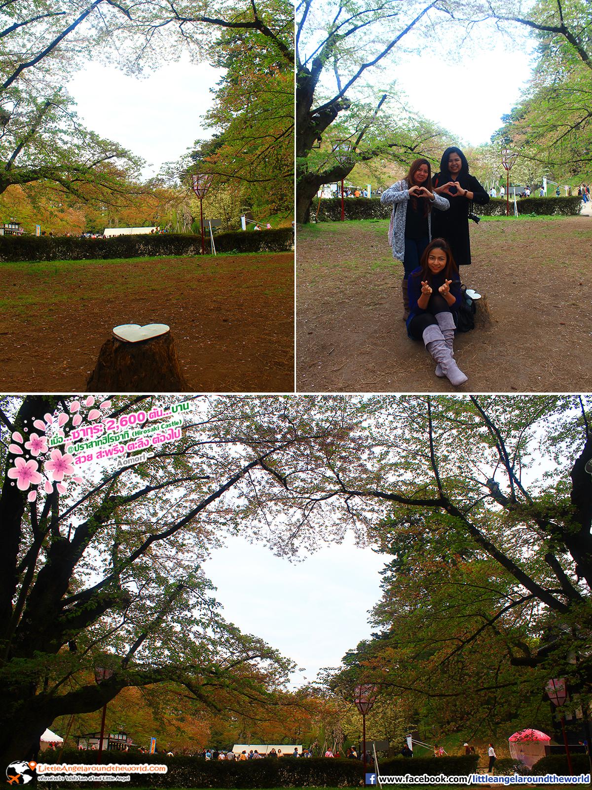 ต้นไม่รูปหัวใจ อีกหนึ่งไฮไลท์ของการมาเที่ยวที่สวนฮิโรซากิ : เที่ยวอาโอโมริ ซากุระกว่า 2,600 ต้น ที่ปราสาทฮิโรซากิ (Hirosaki Castle)