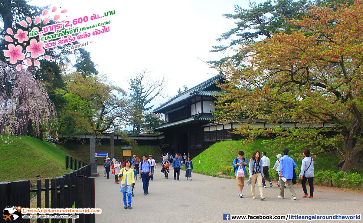 ทางเข้าฝั่งประตู Otemon : เที่ยวอาโอโมริ ซากุระกว่า 2,600 ต้น ที่ปราสาทฮิโรซากิ (Hirosaki Castle)