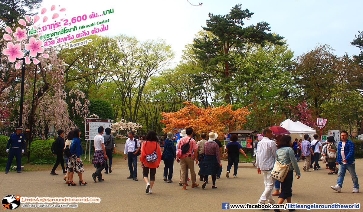 บรรยากาศผู้คนที่มาเที่ยวที่นี่ : เที่ยวอาโอโมริ ซากุระกว่า 2,600 ต้น ที่ปราสาทฮิโรซากิ (Hirosaki Castle)
