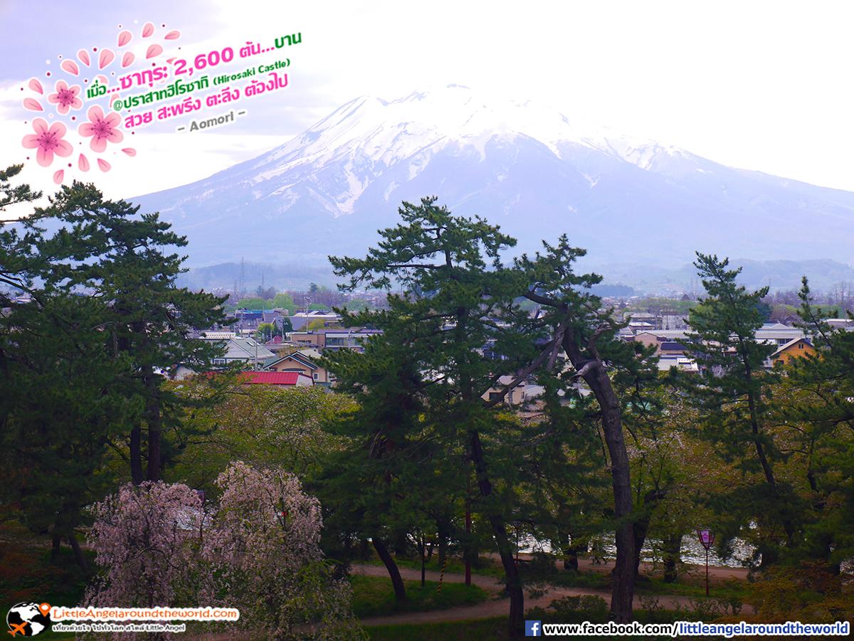 จุดชมวิวฟูจิน้อย มองจากบริเวณด้านข้างปราสาท ได้ทั้งดูซากุระและฟูจิน้อย คุ้มมาก : เที่ยวอาโอโมริ ซากุระกว่า 2,600 ต้น ที่ปราสาทฮิโรซากิ (Hirosaki Castle)