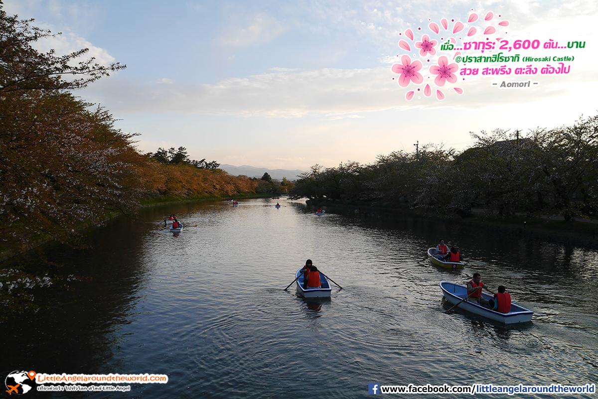 กิจกรรมล่องเรือ พายไปชมซากุระไปมาเป็นคู่ดูสวีทมาก : เที่ยวอาโอโมริ ซากุระกว่า 2,600 ต้น ที่ปราสาทฮิโรซากิ (Hirosaki Castle)