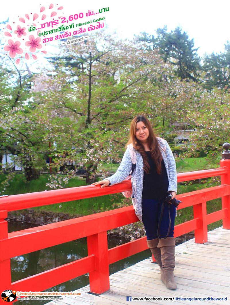 สักภาพกับสะพานแดง : เที่ยวอาโอโมริ ซากุระกว่า 2,600 ต้น ที่ปราสาทฮิโรซากิ (Hirosaki Castle)