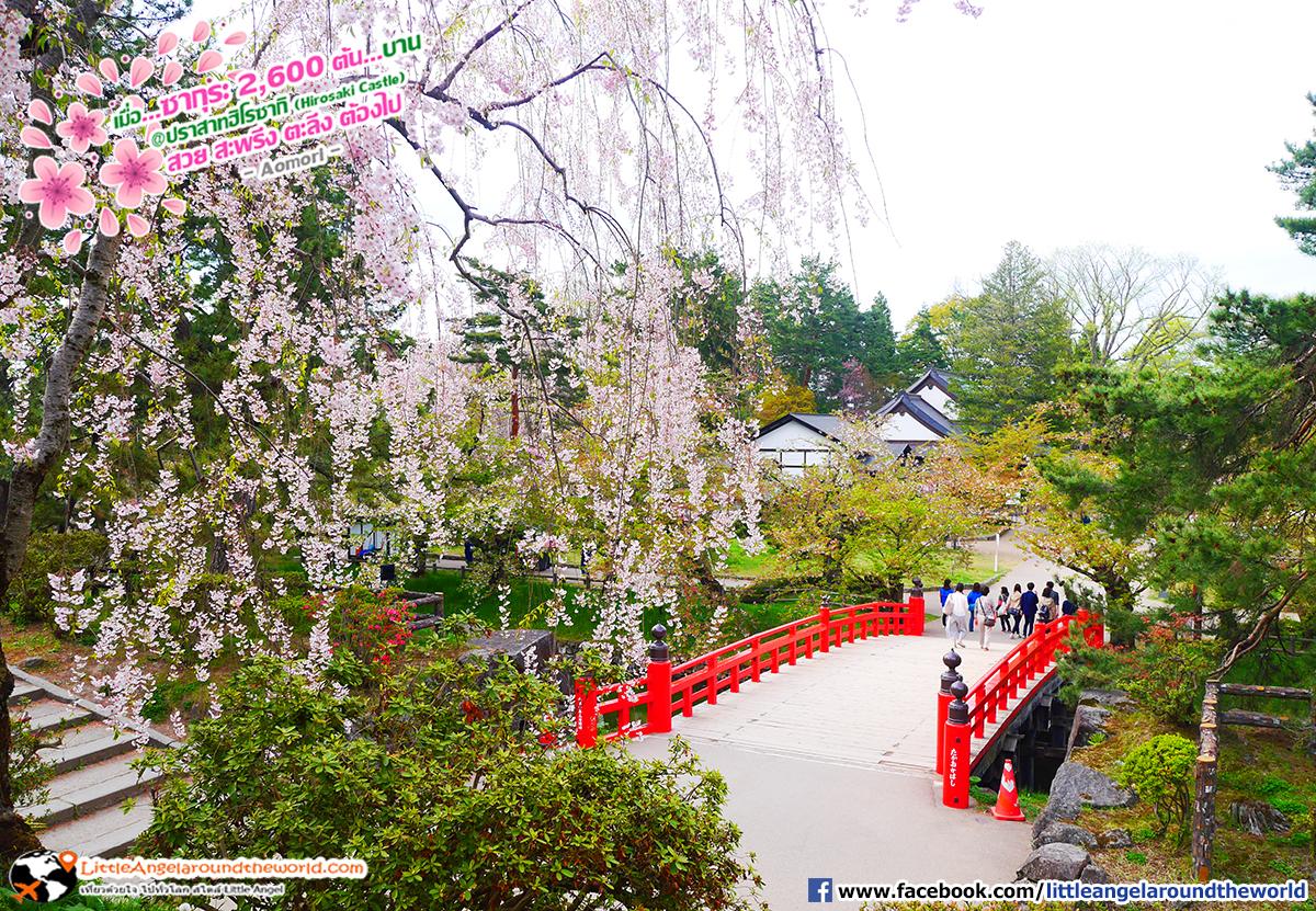 มีซากุระตามจุดต่างๆ สวยงามไปทุกที่ที่เห็น : เที่ยวอาโอโมริ ซากุระกว่า 2,600 ต้น ที่ปราสาทฮิโรซากิ (Hirosaki Castle)
