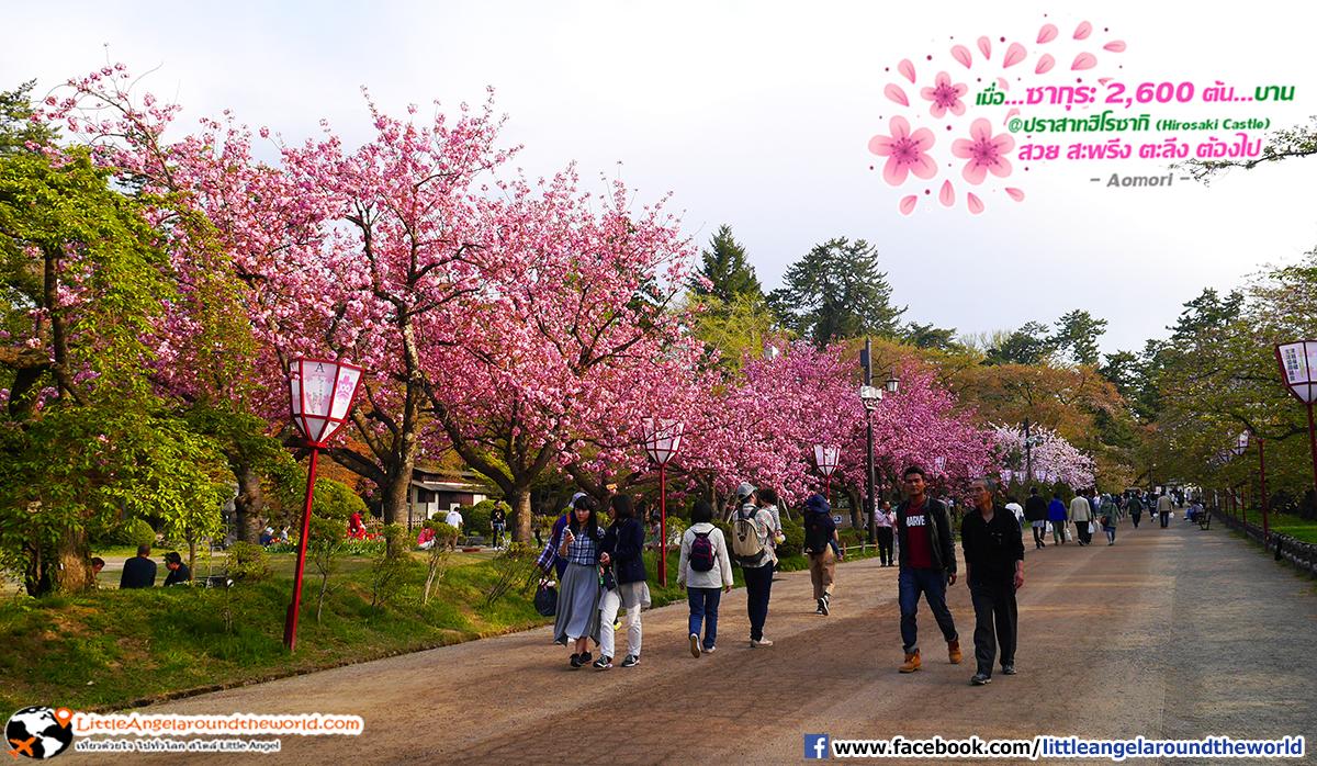 การเดินชมซากุระบาน มันฟินมาก : เที่ยวอาโอโมริ ซากุระกว่า 2,600 ต้น ที่ปราสาทฮิโรซากิ (Hirosaki Castle)