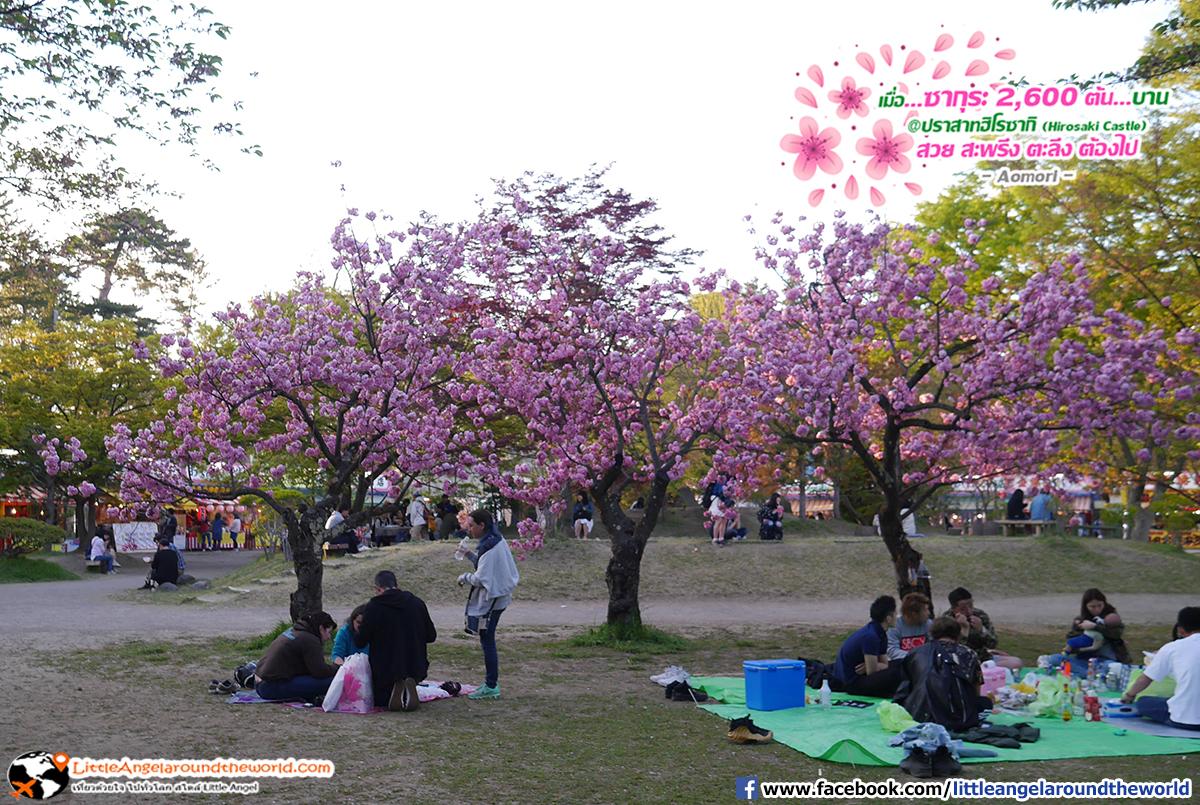 ผู้คนต่างพากันมานั่งพักผ่อนหรือปิคนิคใต้ต้นซากุระ : เที่ยวอาโอโมริ ซากุระกว่า 2,600 ต้น ที่ปราสาทฮิโรซากิ (Hirosaki Castle)