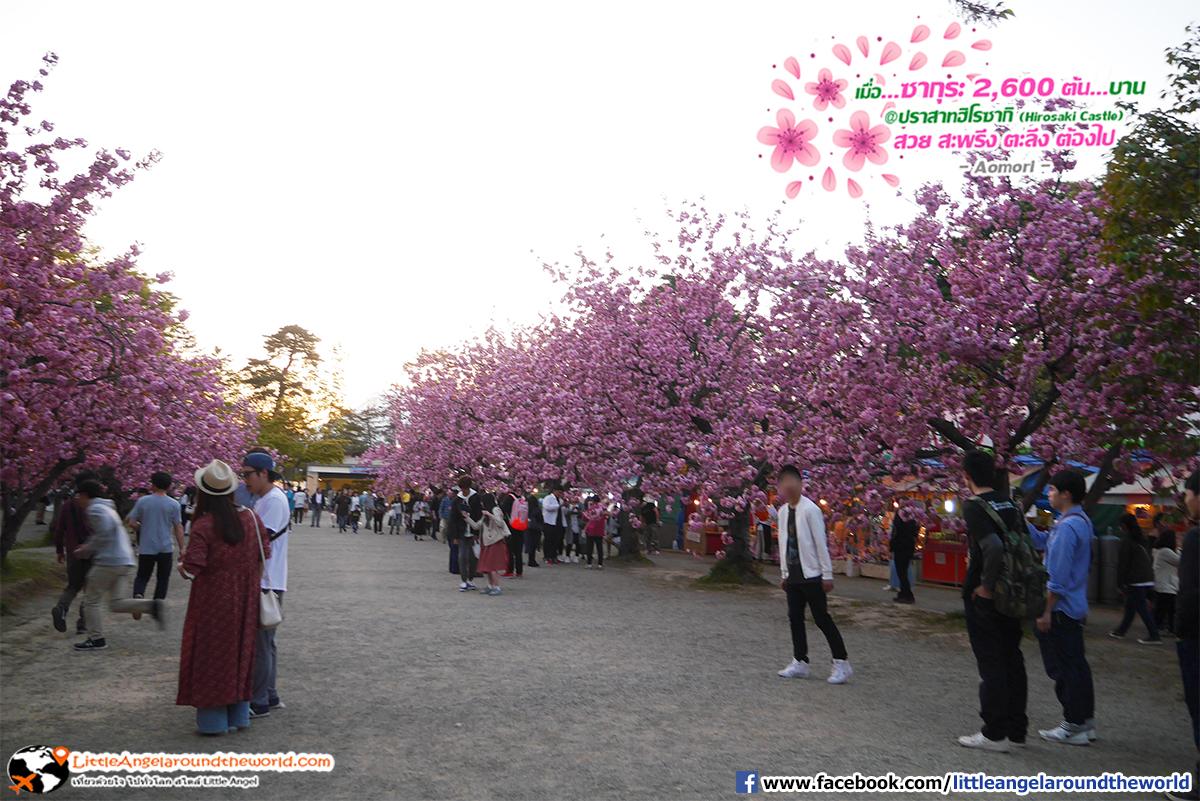 ผู้ใหญ่หรือเด็ก ก็นิยมการมาชมซากุระ : เที่ยวอาโอโมริ ซากุระกว่า 2,600 ต้น ที่ปราสาทฮิโรซากิ (Hirosaki Castle)