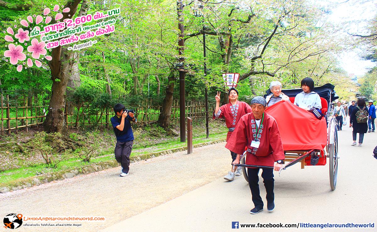 มีบริการรถลาก ได้บรรยากาศมาก : เที่ยวอาโอโมริ ซากุระกว่า 2,600 ต้น ที่ปราสาทฮิโรซากิ (Hirosaki Castle)