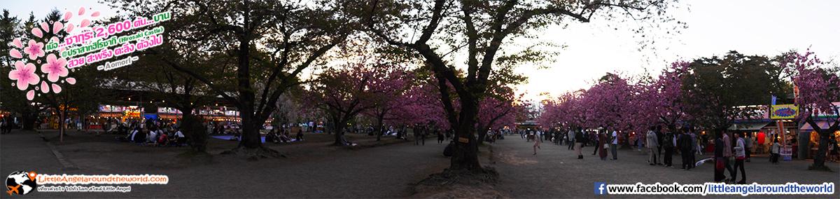 บรรยากาศพลบค่ำ กับต้นซากุระ : เที่ยวอาโอโมริ ซากุระกว่า 2,600 ต้น ที่ปราสาทฮิโรซากิ (Hirosaki Castle)