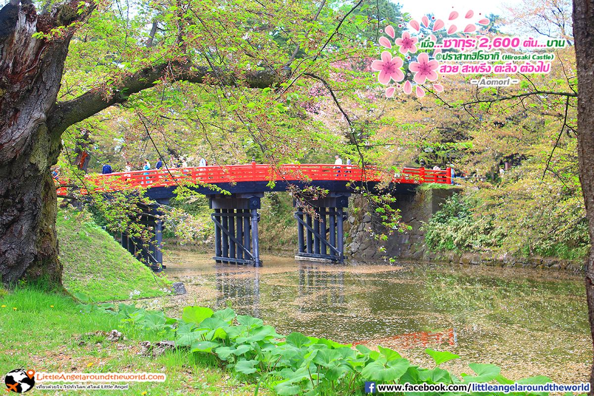 สะพานแดงมุมนี้สวยเข้ากับซากุระมาก : เที่ยวอาโอโมริ ซากุระกว่า 2,600 ต้น ที่ปราสาทฮิโรซากิ (Hirosaki Castle)