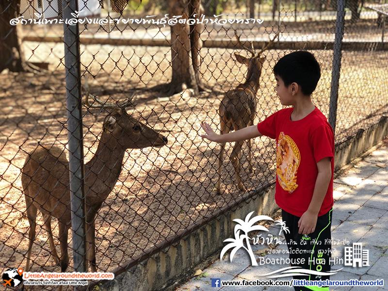 สถานีเพาะเลี้ยงและขยายพันธุ์สัตว์ป่าห้วยทราย : รีวิวเที่ยวหัวหิน ส่องคอนโดติดทะเล Boathouse Hua Hin